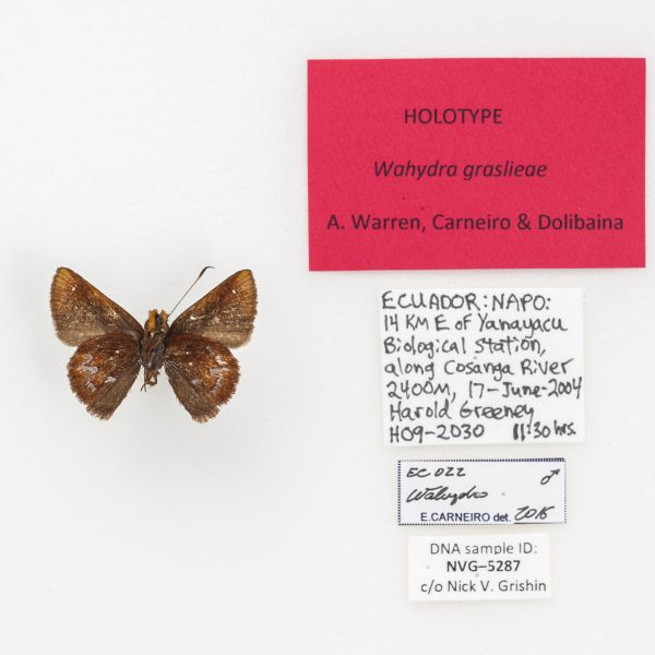A small, brown butterfly specimen next to clippings of collection data