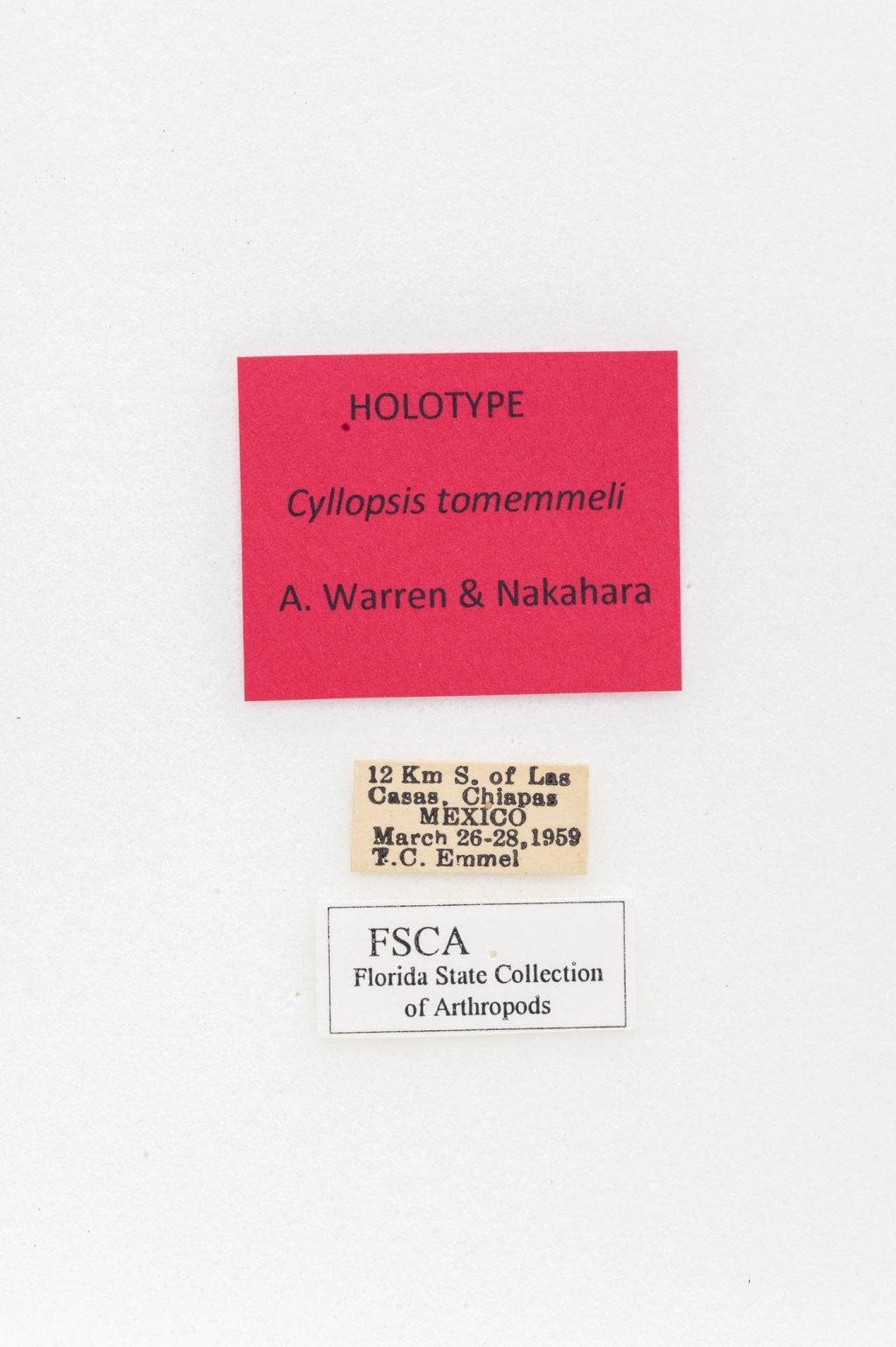 A label containing collection data for a butterfly specimen