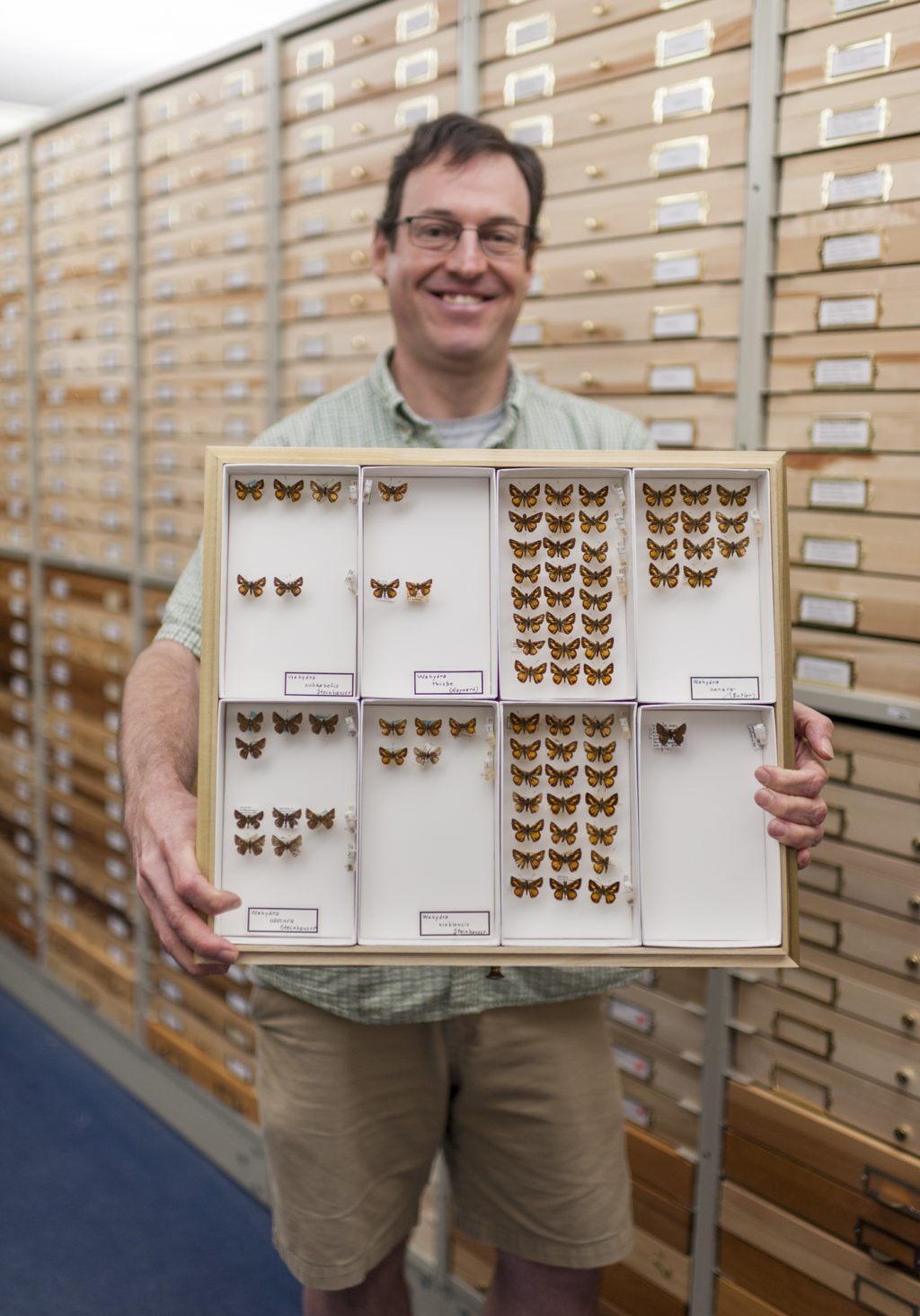 A researcher holds a drawer of butterfly specimens in the Florida Museum lepidoptera collection