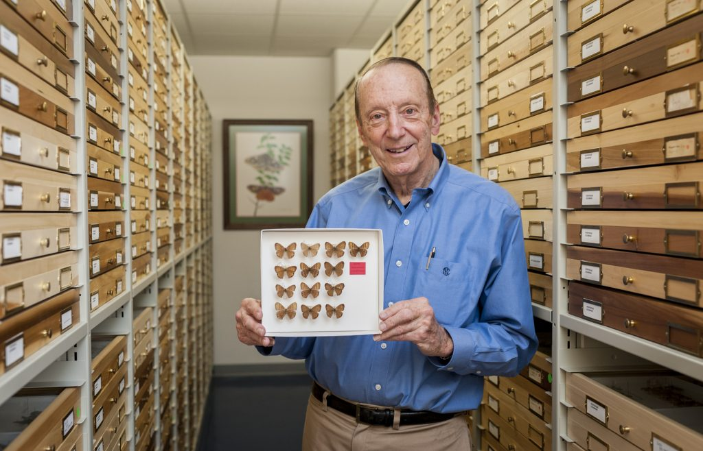 Portrait of a researcher in a Florida Museum collection