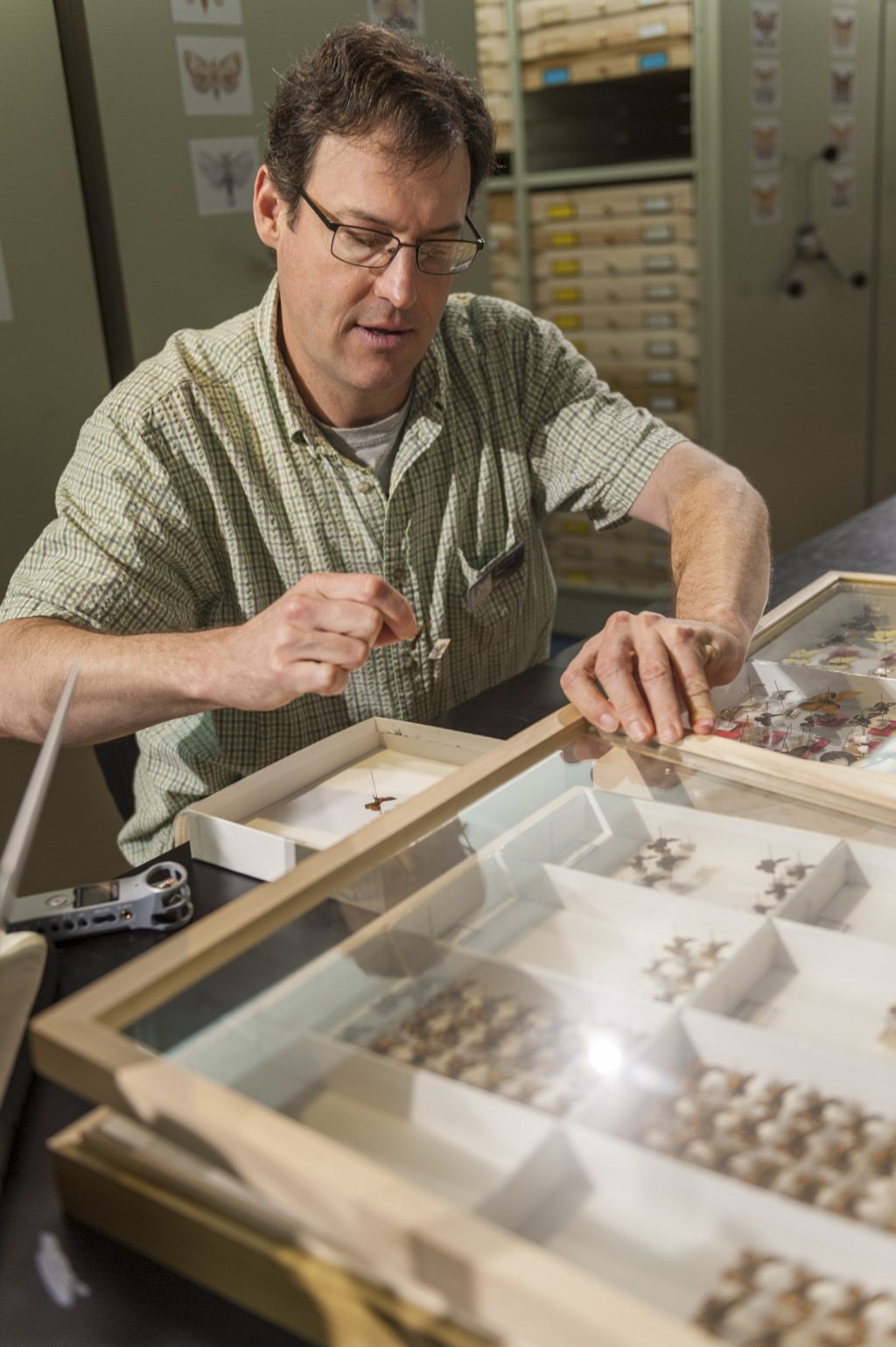 A scientist examines drawers of specimens in a Florida Museum collection