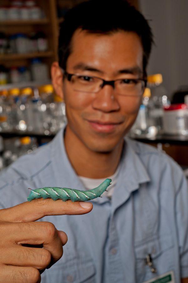 Akito Kawahara displays a tobacco hornworm larva