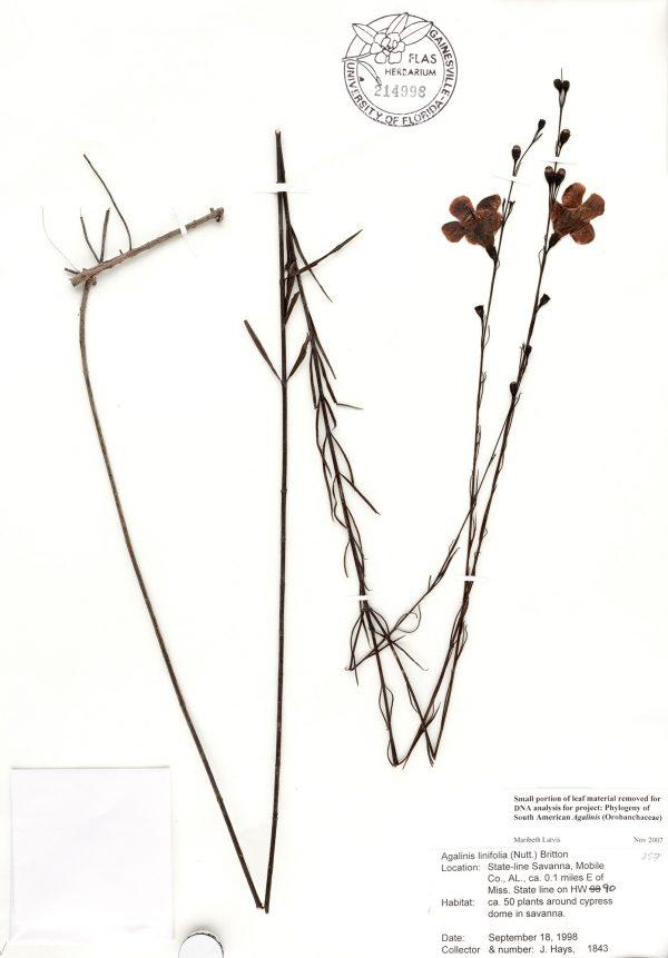 herbarium specimen sheet