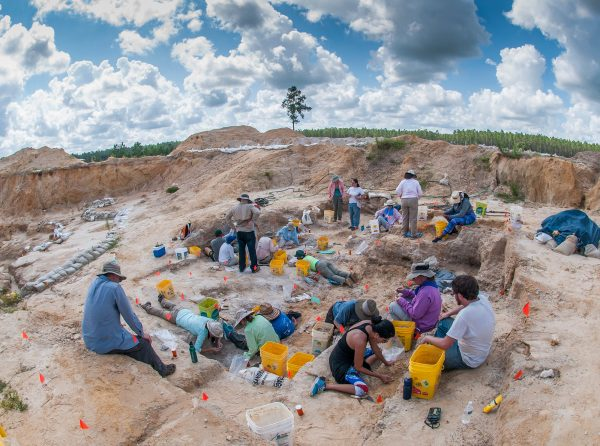 group digging at fossil site