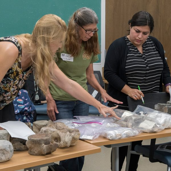 Participants examine and sort fossils during the workshop. Florida Museum photo by Jeff Gage