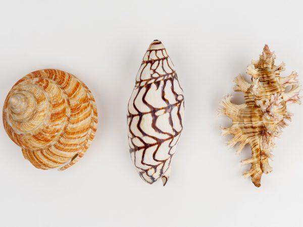 Three shell specimens