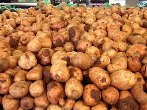 potatoes piled up for sale
