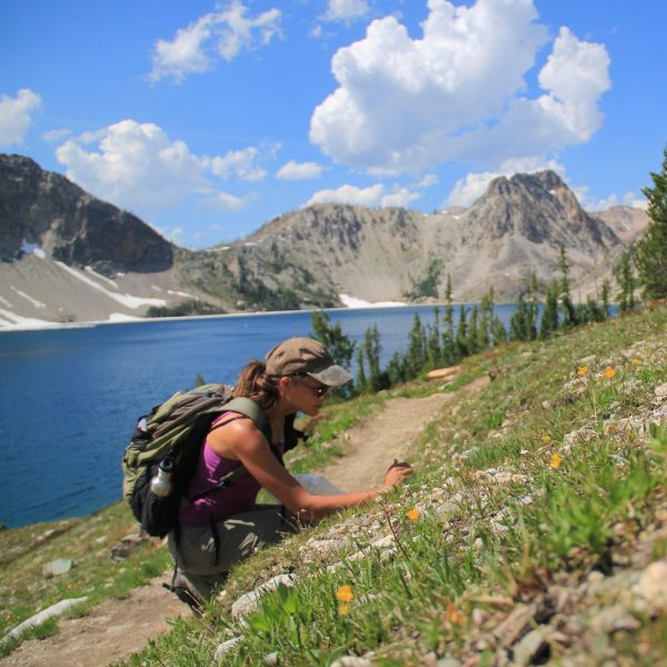 Botanist Rebecca Stubbs kneels on a mountainside to collect a plant.