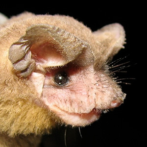 Five Facts: Bats in Florida – Florida Museum Science