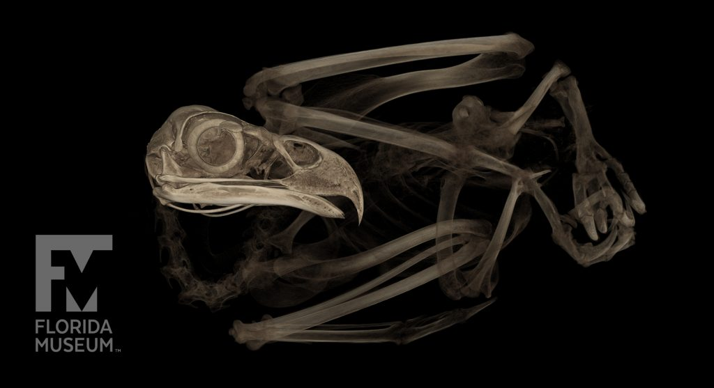 CT scan of an eagle body