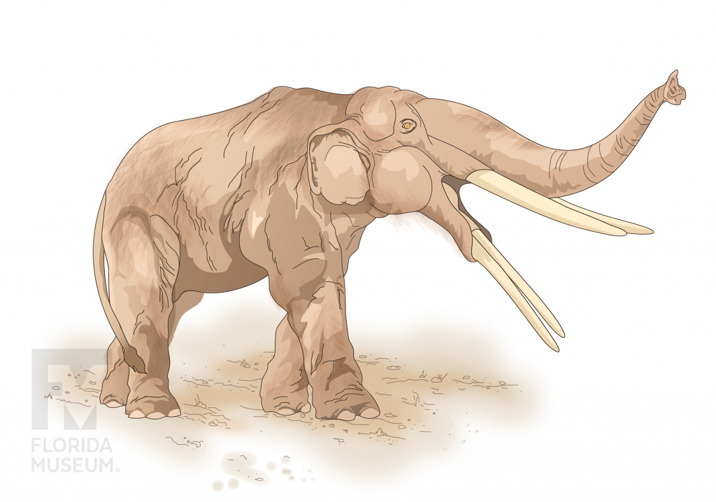 illustration of a gomphothere