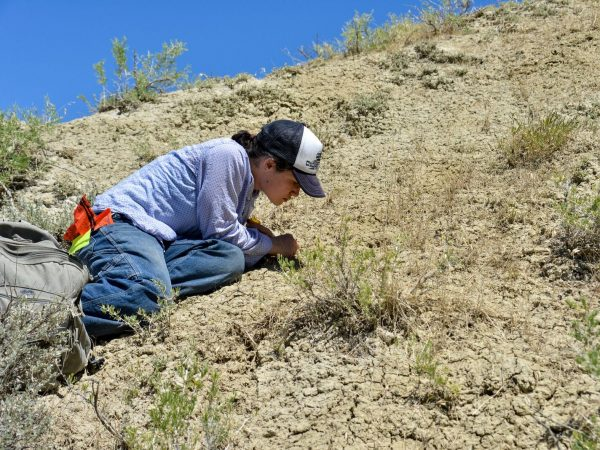 scientist Natasha Vitek kneels on hill to dig for fossils