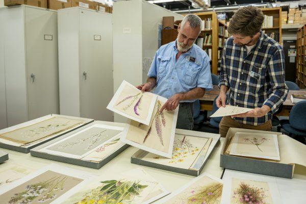 Whitten and Majure examine paintings