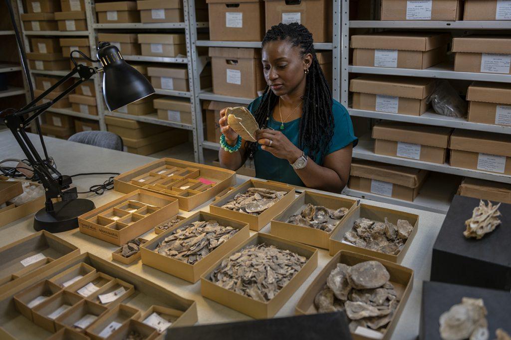 Cannarozzi examining fossils