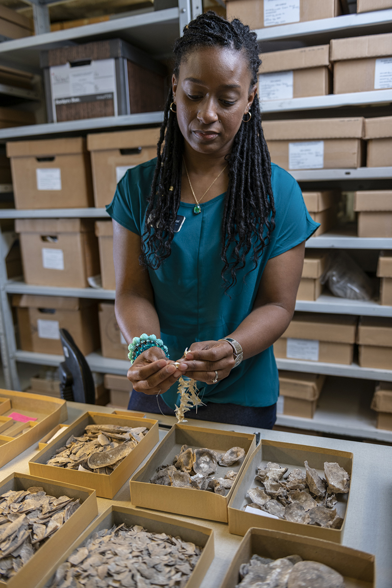 A female researcher examines fossils