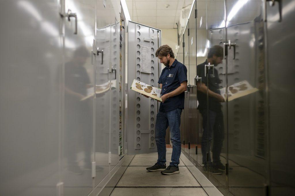 Lucas Majure in herbarium.