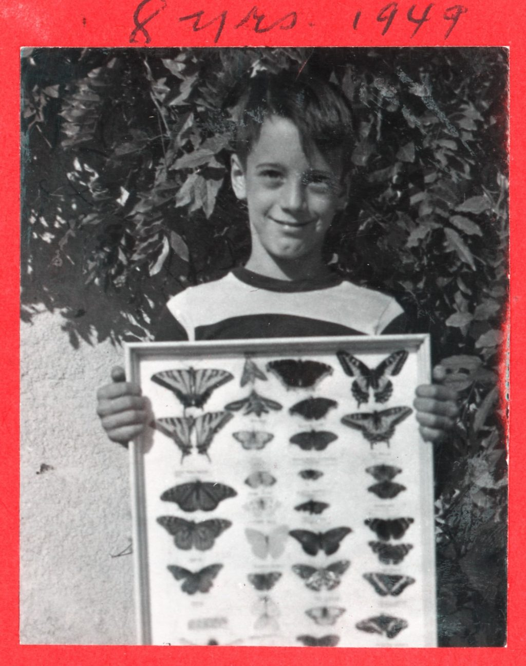 Emmel displays preserved butterflies in a frame