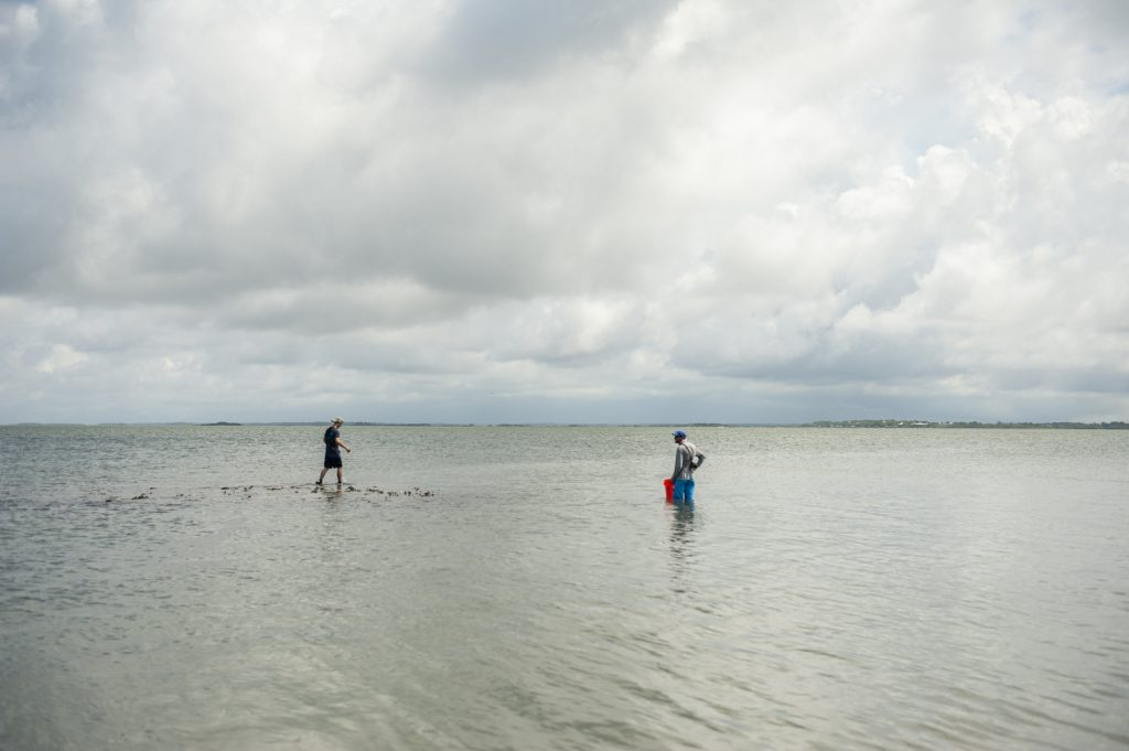 Two students wade offshore looking for turtles.