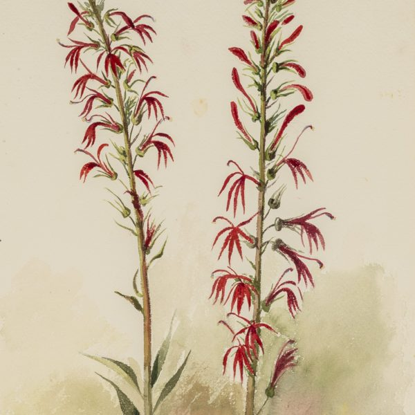 Watercolor painting of tall, red flowers