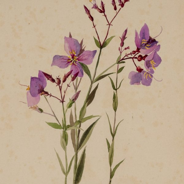 Painting of purple flowers