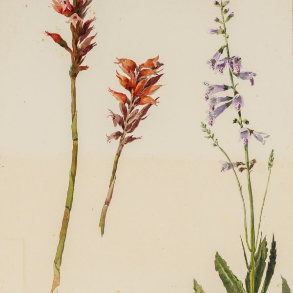 painting of red and purple flowers