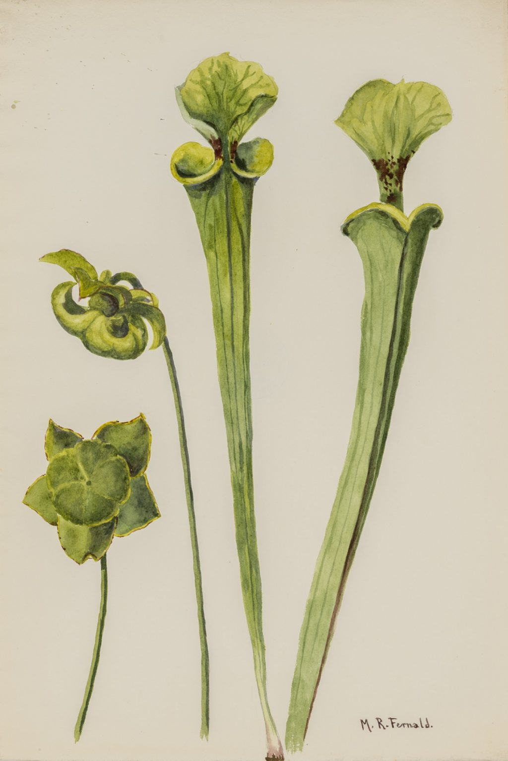 Painting of a tall, green plant