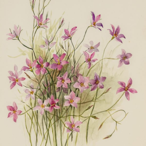 Painting of a cluster of pink flowers