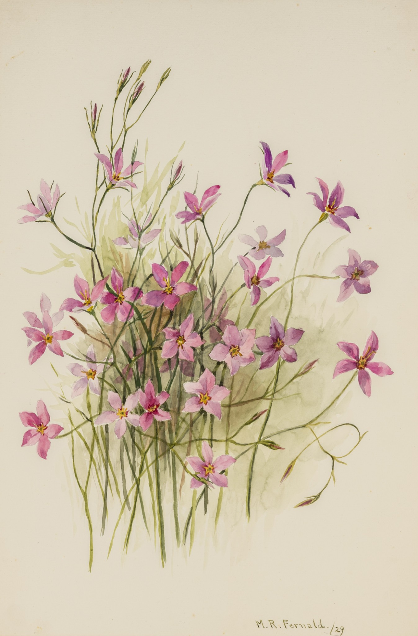 Forgotten For Decades Rediscovered Watercolor Collection Features Hundreds Of Florida Plants Florida Museum Science