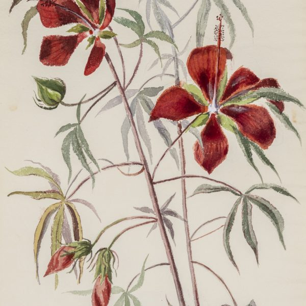 Painting of large, red flowers
