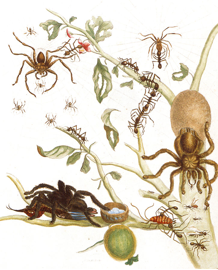illustration of bird-eating spider feeding on hummingbird, leafcutter ants stripping plant, spider with its egg sac