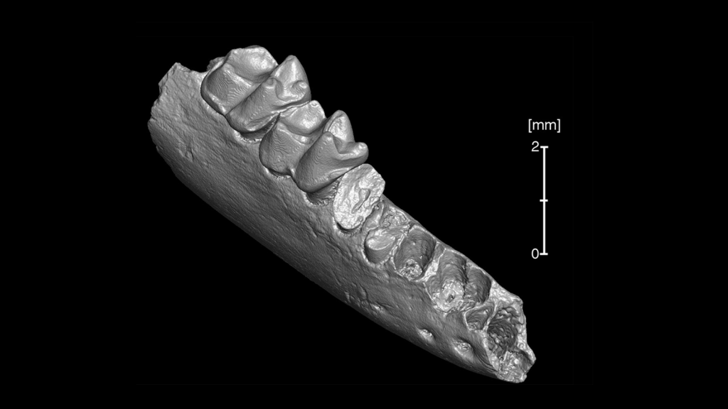 CT scan of fossil jaw