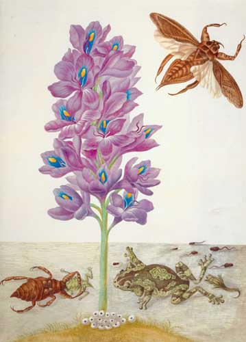illustration of water hyacinth, water scorpion and frog life cycle