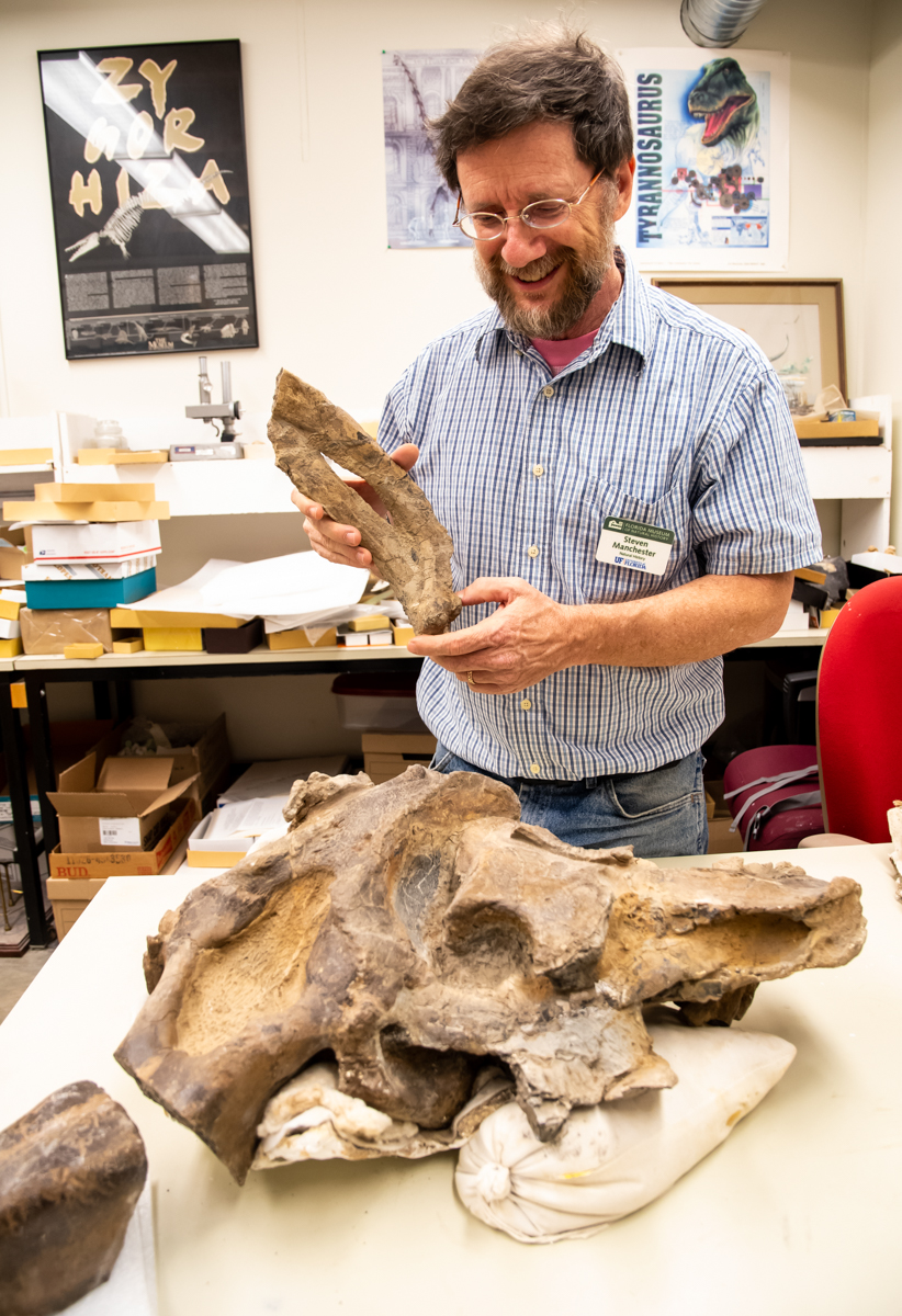 man holds fossil ribs and stands over fossil sea cow skull