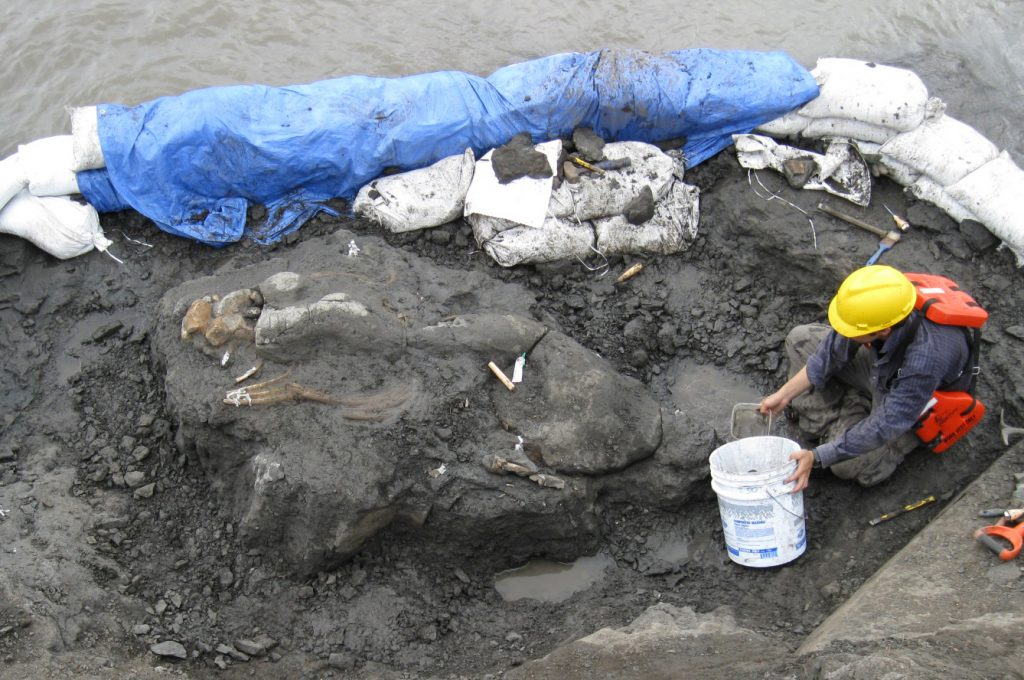 fossil skeleton partially exposed in rock near canal with sandbags on edge
