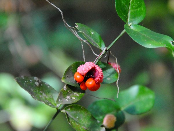 small red fruit on a green branch