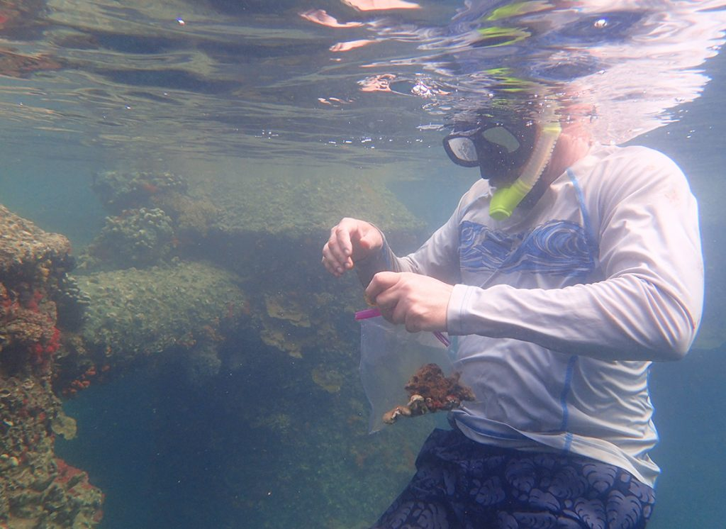 man in snorkel collects coral samples from reef