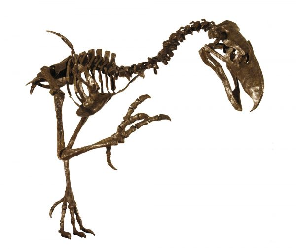 resin skeleton reproduction of terror bird