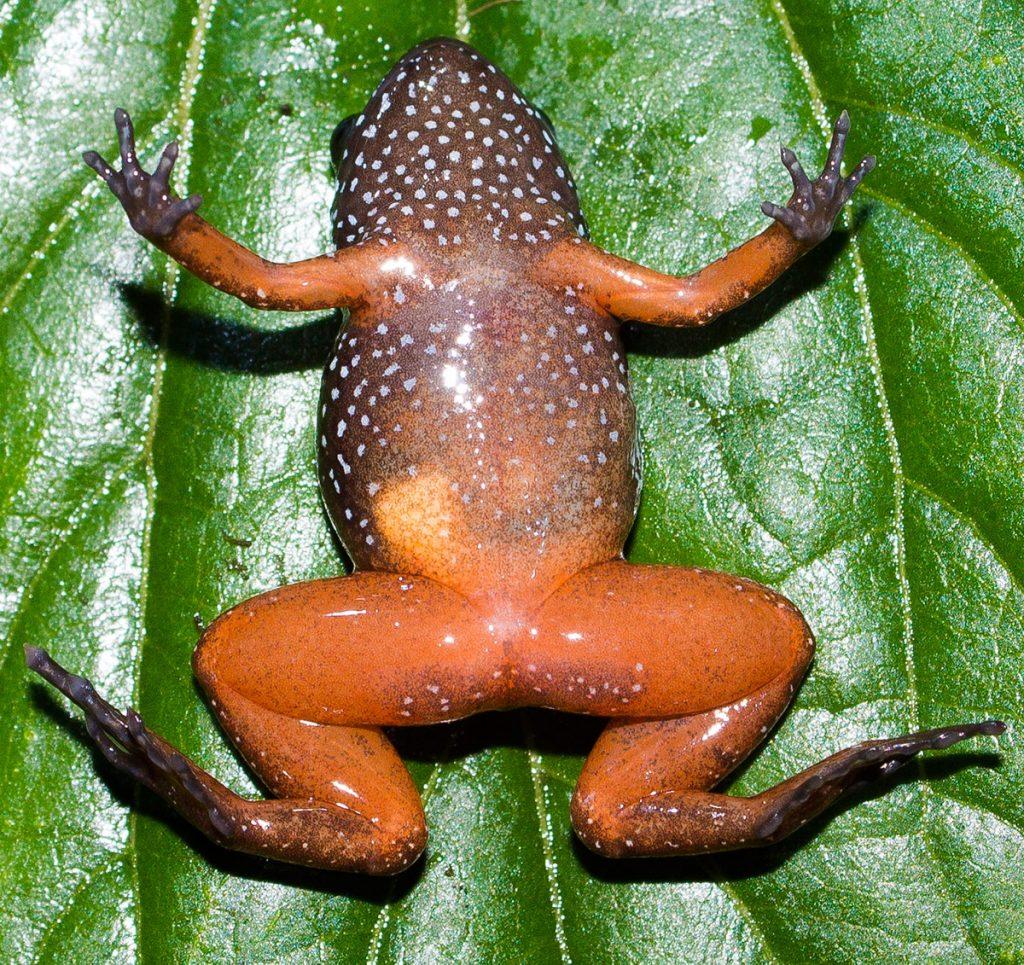bright orange underbelly of frog