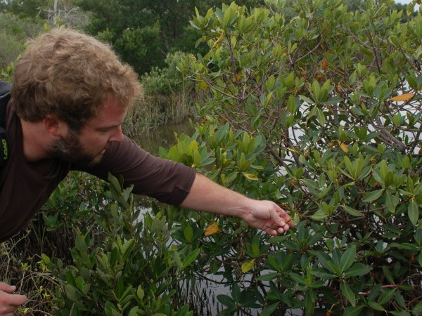 man reaching for mangrove plant