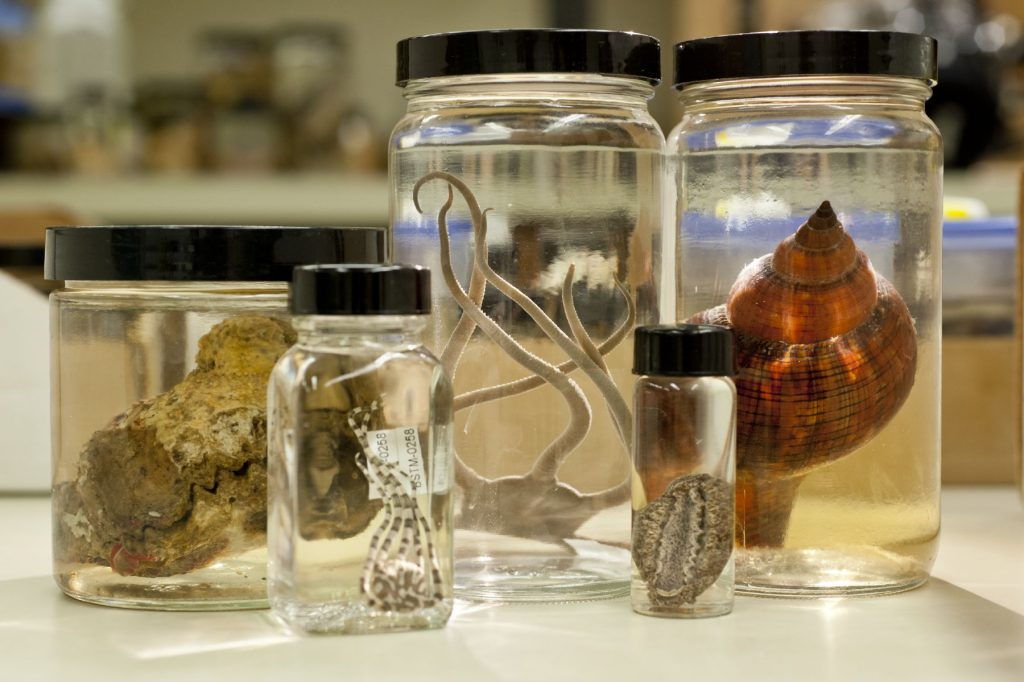 Invertebrate zoology specimens in jars