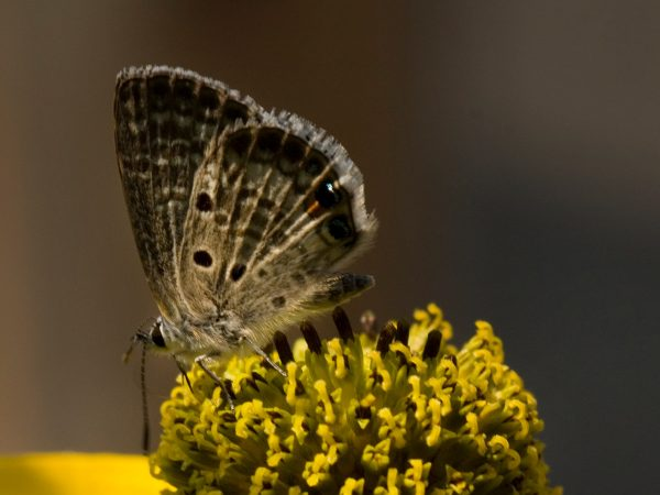 small brown butterfly on flower center