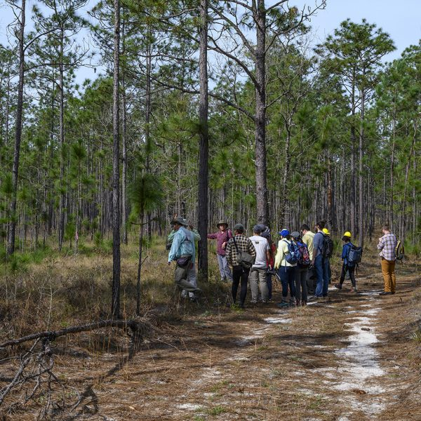 group of people in forest