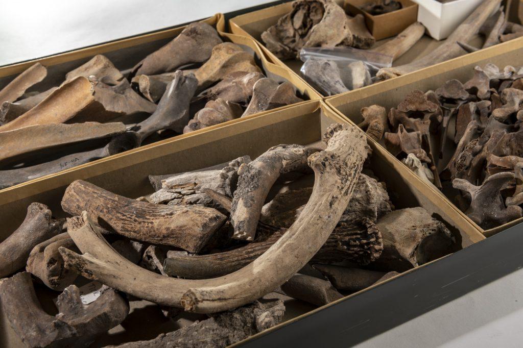 box of ancient deer antlers