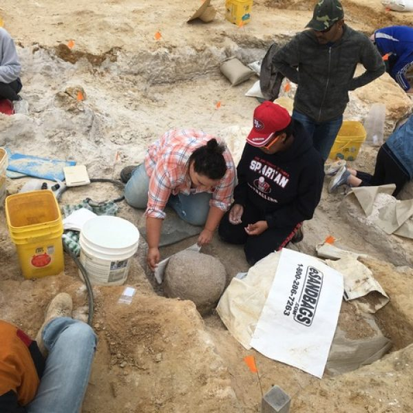 Volunteers, students and scientists unearth a fossil from soil