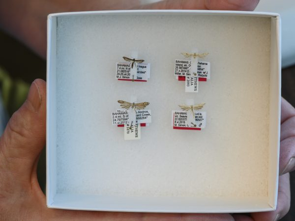 box with four tiny moths and their labels