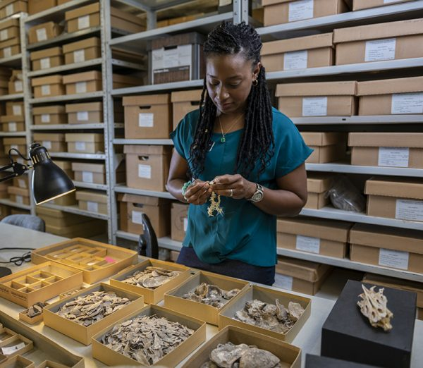 woman in collections looking at specimens