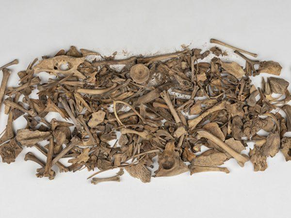 small bones