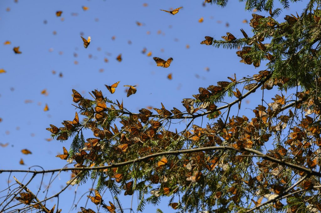 butterflies on tree branches and in sky