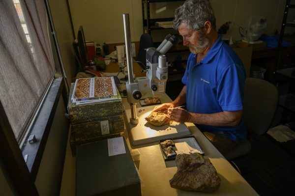 A scientist examining a fossil
