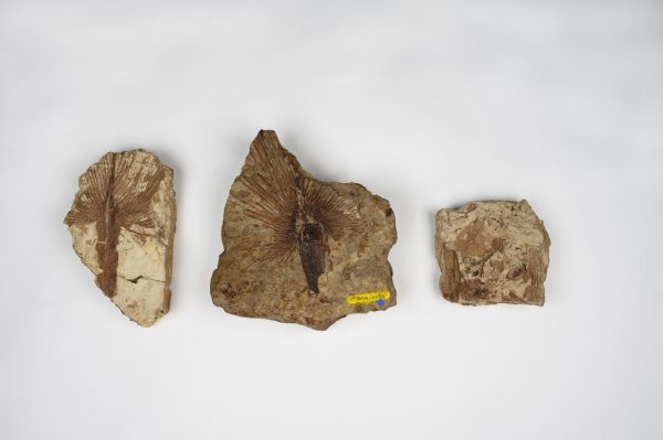 Specimens from the paleobotany collection pictured against a white background